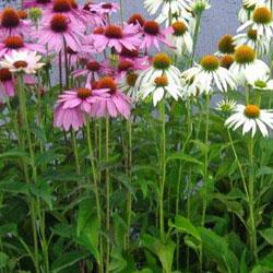 Vasten planten Kwekerij Daylight