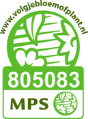 MPS_805083_Kwekerij_Daylight